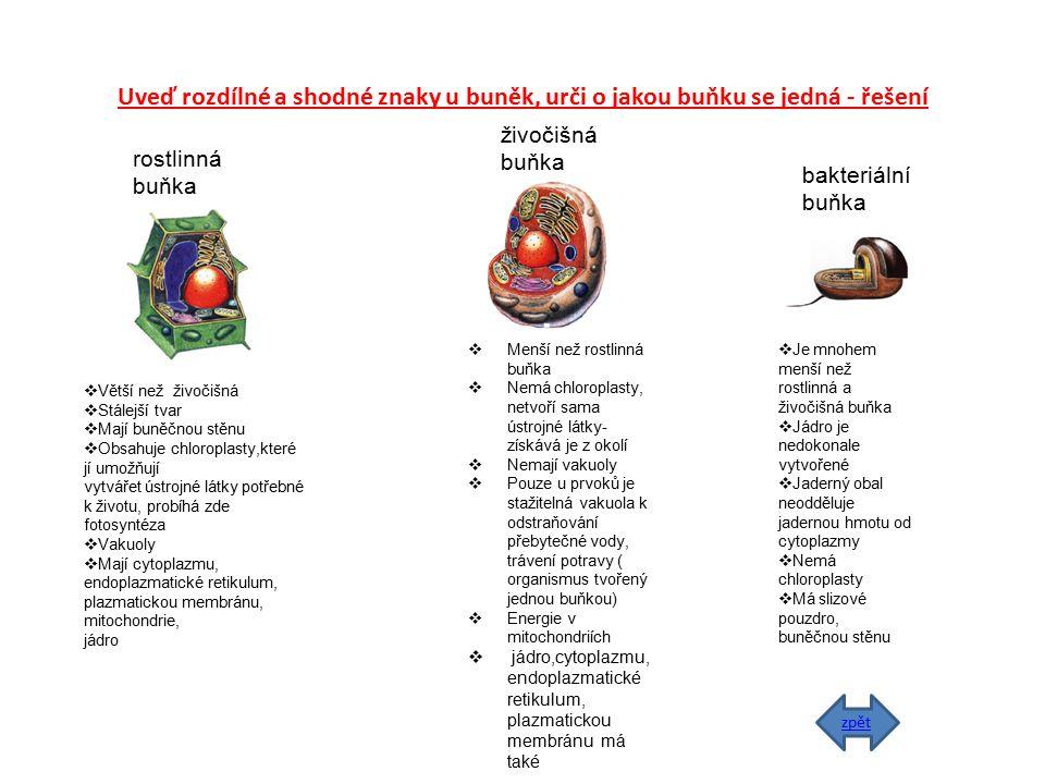 Uveď rozdílné a shodné znaky u buněk, urči o jakou buňku se jedná - řešení rostlinná buňka živočišná buňka bakteriální buňka  Větší než živočišná  S