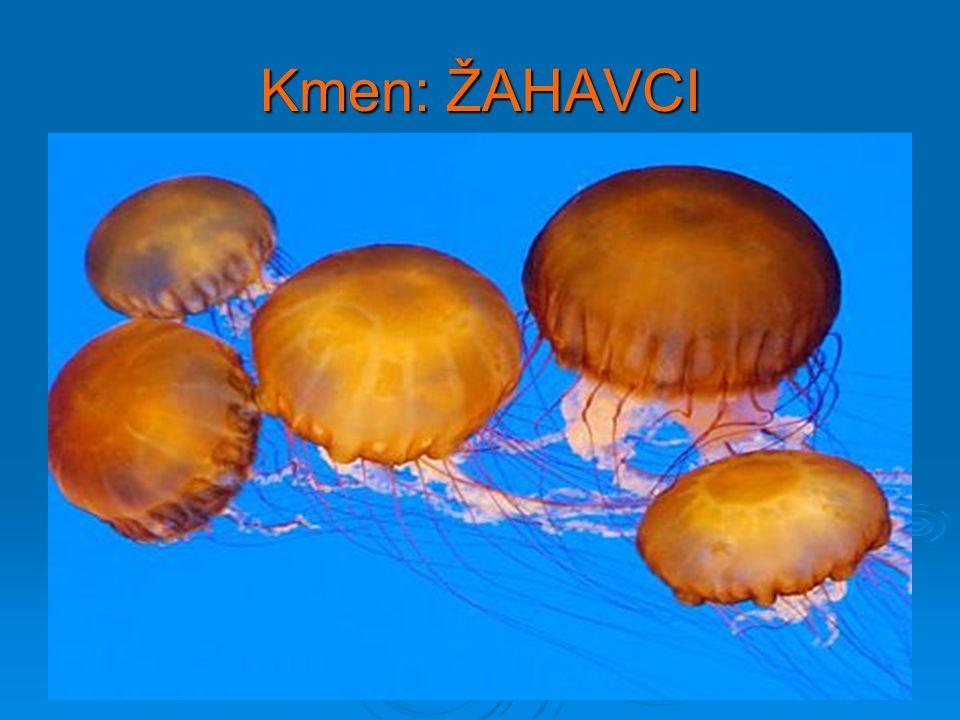 4) Vyberte popis kmene žahavci: a) Jsou to mnohobuněční živočichové s tělní dutinou – láčkou – a žahavými buňkami na chapadlech b) Jsou to mnohobuněční živočichové, jejichž tělo je měkké a většinou je kryto schránkou z uhličitanu vápenatého, nebo obsahuje aspoň vápenitou destičku c) Jsou to jednobuněční živočichové, kteří vždy obsahují chlorofyl a provádějí fotosyntézu