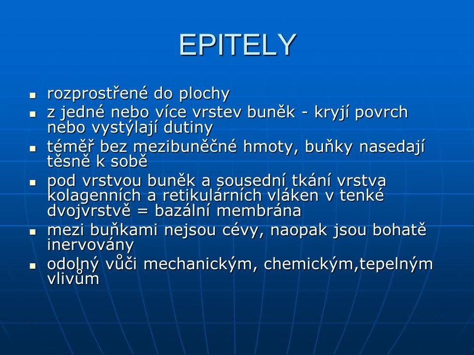 EPITELY