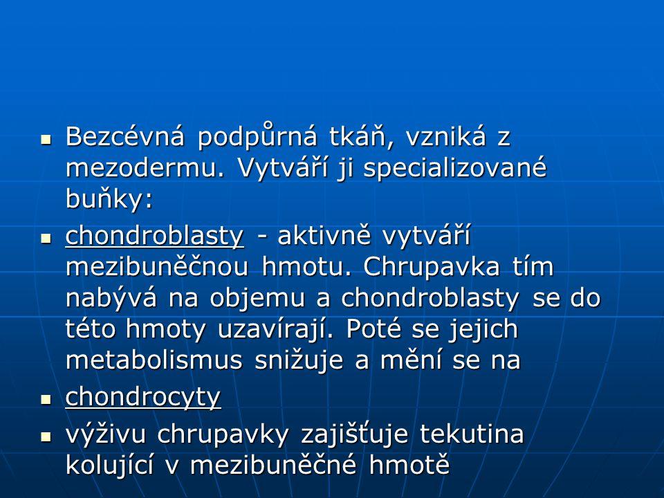 Chrupavka hyalinní (předchůdce kostí) Chrupavka hyalinní (předchůdce kostí) Chrupavka vazivová (např.