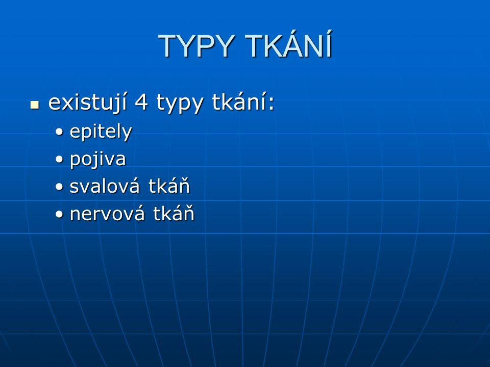 TYPY TKÁNÍ existují 4 typy tkání: existují 4 typy tkání: epitelyepitely pojivapojiva svalová tkáňsvalová tkáň nervová tkáňnervová tkáň
