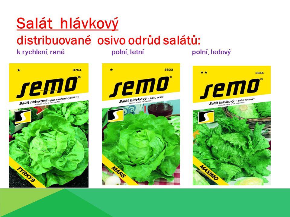Salát hlávkový distribuované osivo odrůd salátů: k rychlení, rané polní, letní polní, ledový ll
