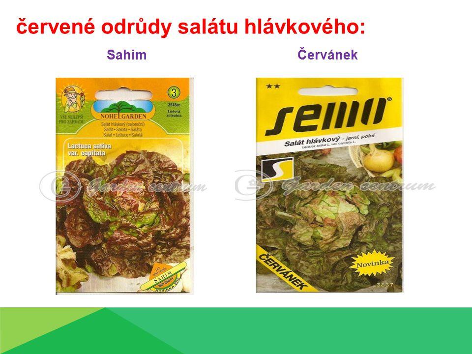 červené odrůdy salátu hlávkového: Sahim Červánek