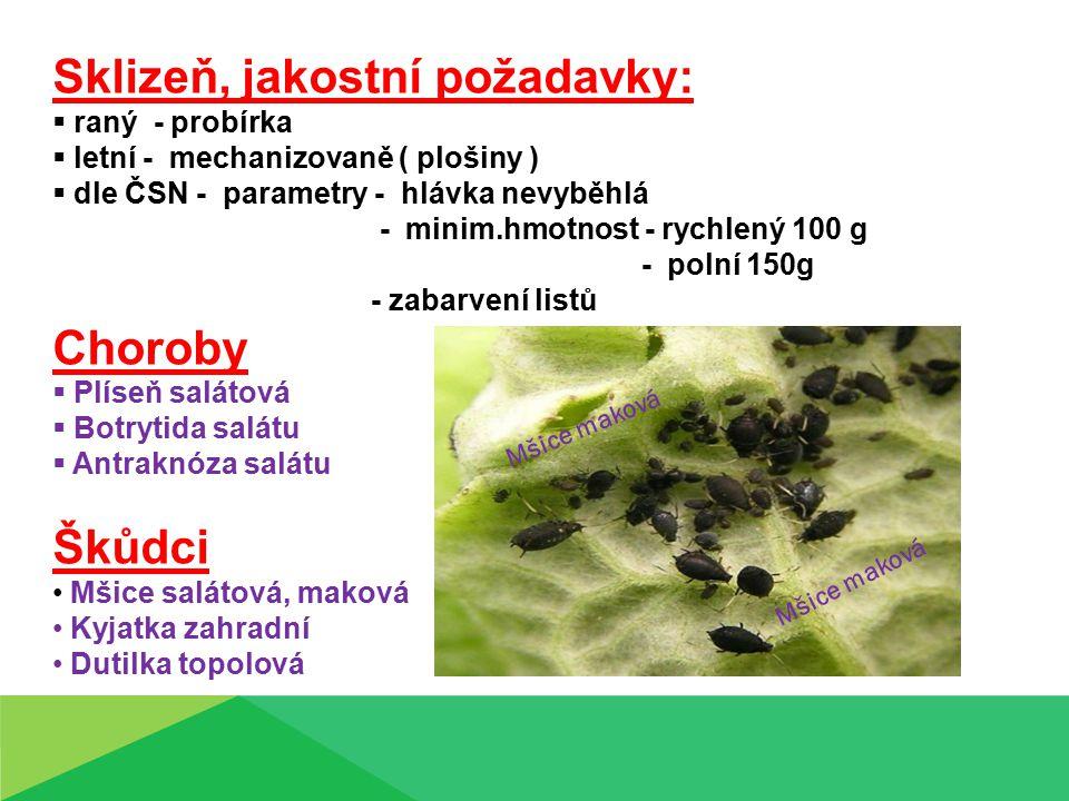 Sklizeň, jakostní požadavky:  raný - probírka  letní - mechanizovaně ( plošiny )  dle ČSN - parametry - hlávka nevyběhlá - minim.hmotnost - rychlený 100 g - polní 150g - zabarvení listů Choroby  Plíseň salátová  Botrytida salátu  Antraknóza salátu Škůdci Mšice salátová, maková Kyjatka zahradní Dutilka topolová Mšice maková