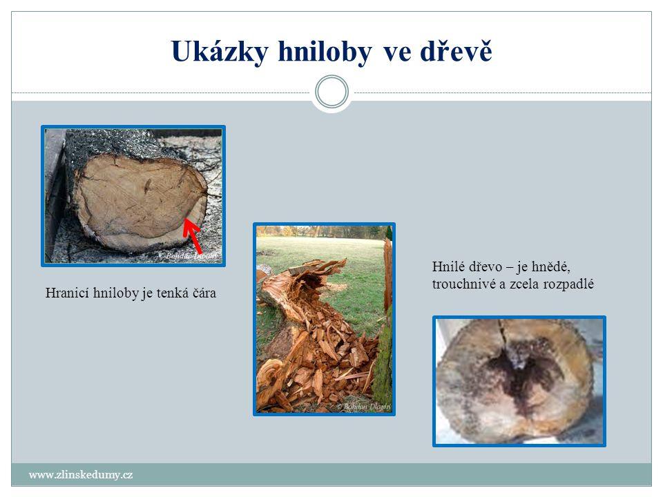 Ukázky hniloby ve dřevě www.zlinskedumy.cz Hranicí hniloby je tenká čára Hnilé dřevo – je hnědé, trouchnivé a zcela rozpadlé