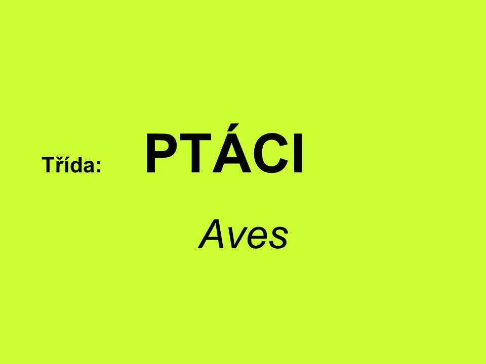 Třída: PTÁCI Aves