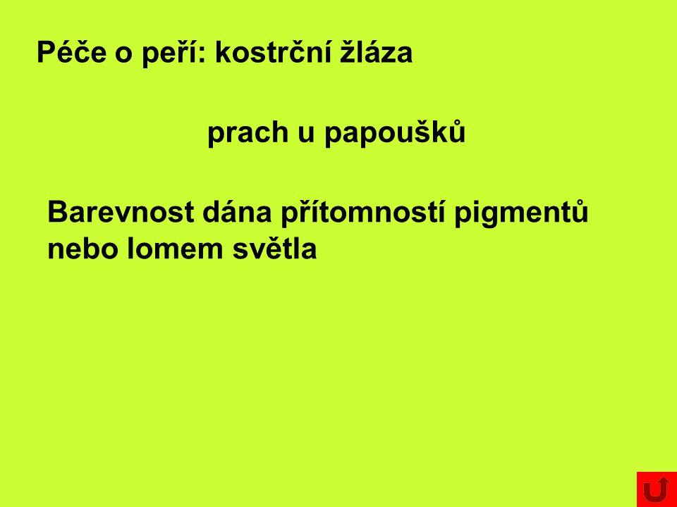 Péče o peří: kostrční žláza prach u papoušků Barevnost dána přítomností pigmentů nebo lomem světla