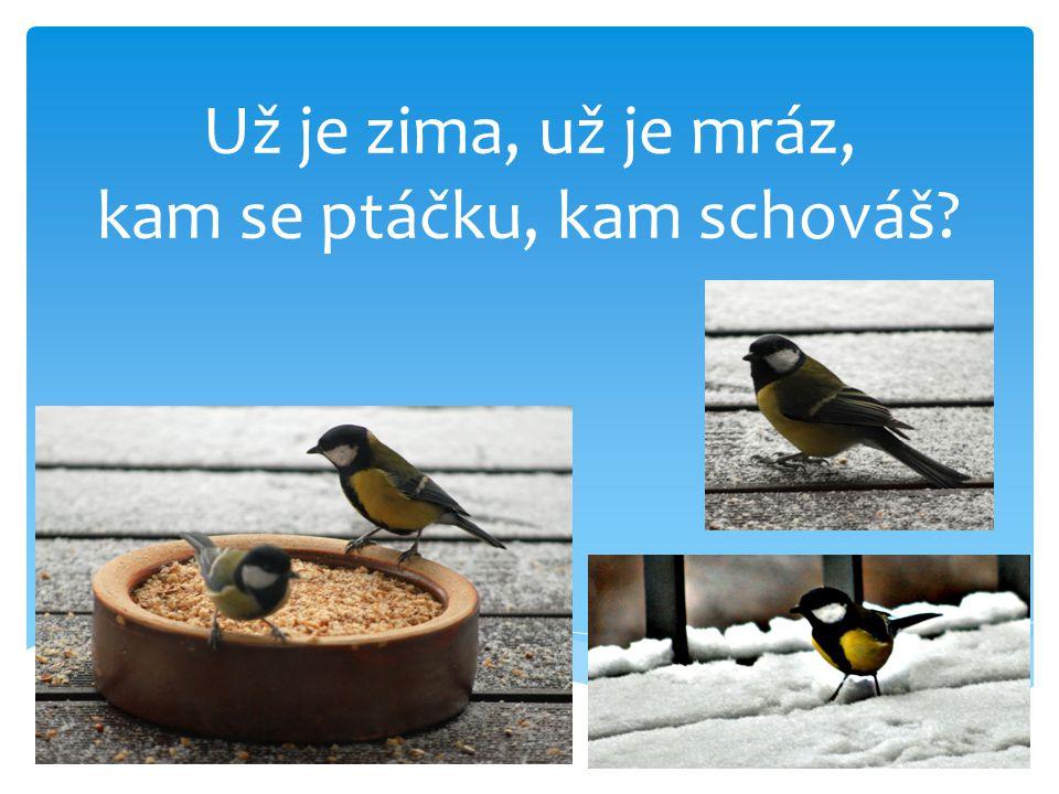 Už je zima, už je mráz, kam se ptáčku, kam schováš?