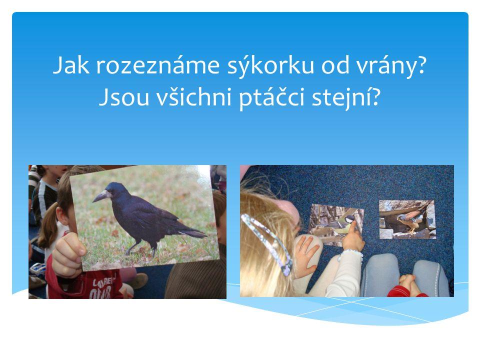 Jak rozeznáme sýkorku od vrány? Jsou všichni ptáčci stejní?