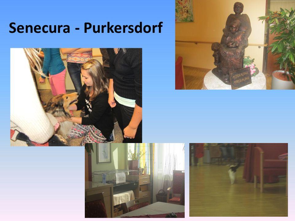 Úterý 8. 10. 2013 Senecura Kittsee