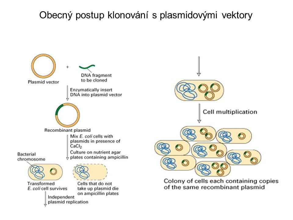 Klonování pomocí plasmidů umožňuje isolaci cílových molekul DNA z směsných roztoků