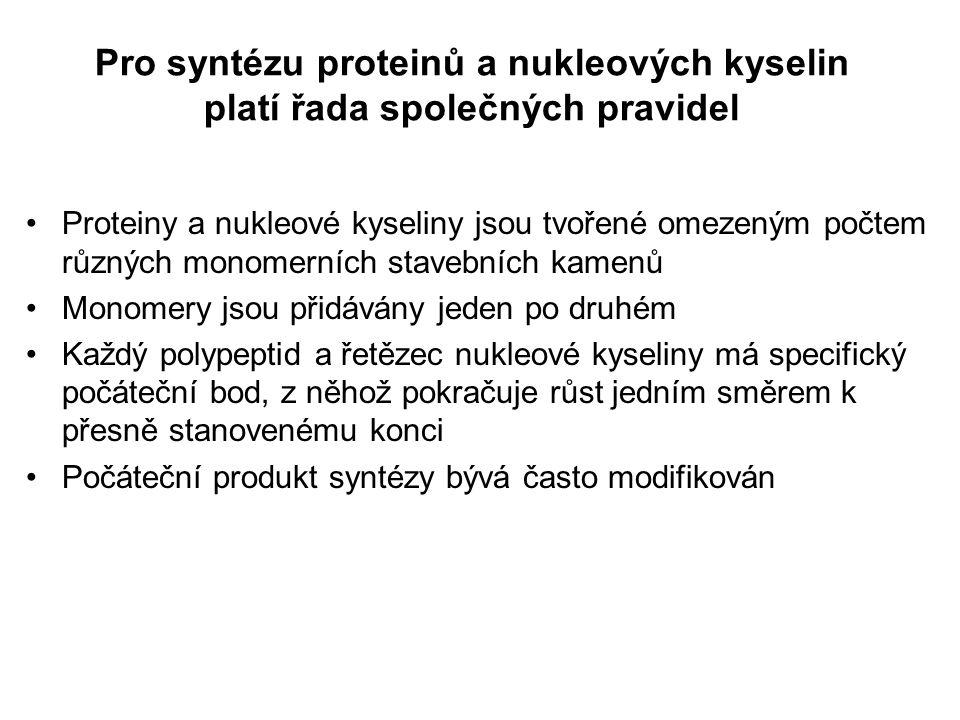 Syntéza nukleových kyselin Vlákna DNA i RNA jsou vytvářena kopírováním templátového vlákna DNA Vlákno nukleové kyseliny roste ve směru 5'  3' RNA polymerázy mohou samy začít syntézu vlákna, zatímco DNA polymerázy vyžadují primer(ové vlákno) Sekven(c)ování a) Syntéza DNA se řídí templátem a vyžaduje primer b) DNA polymeráza postupně přidává deoxynukleotidy ke 3 konci [5 -->3 ]