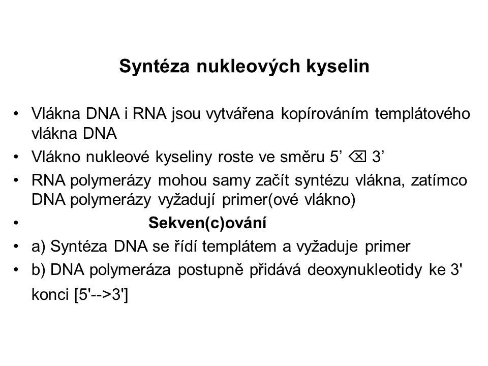 3' 5' Primer se váže do specifické oblasti DNA polymeráza prodlužuje řetězec od 3' konce primeru