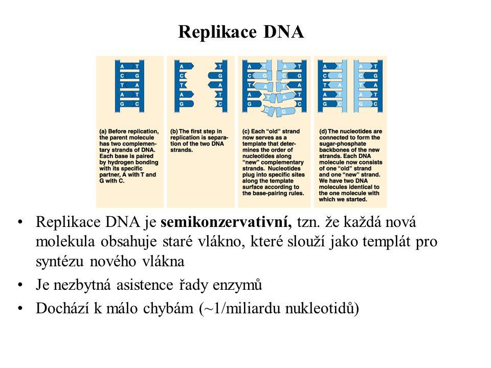 Proteiny se vyvijejí odlišnou rychlostí Fibrinopeptid 0.7 Hemoglobin 5 Cytochrom c 21 Histon H4 500