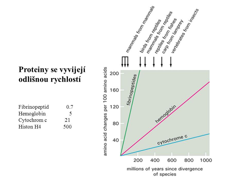 Rozdíl mezi semi-konzervativní a hypotetickou konzervativní replikací DNA