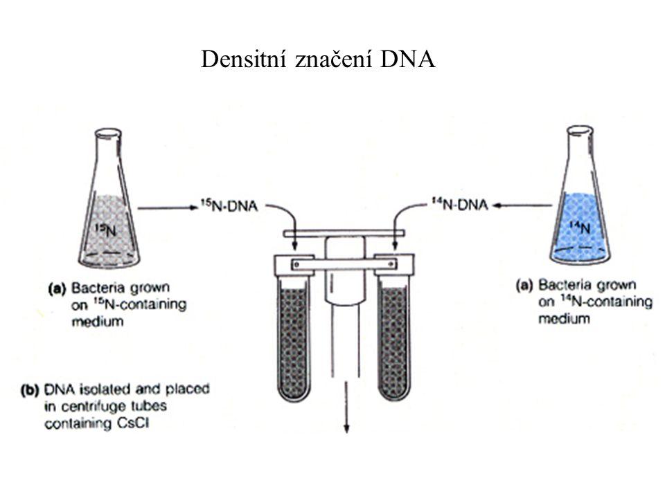 Densitní centrifugace DNA UV