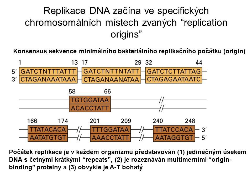 Replikace DNA Replikační origin: syntéza z něho běží oběma směry, čímž se tvoří bublina od replikační vidlice replication fork (= místo elongace DNA) (and DNA helicase)