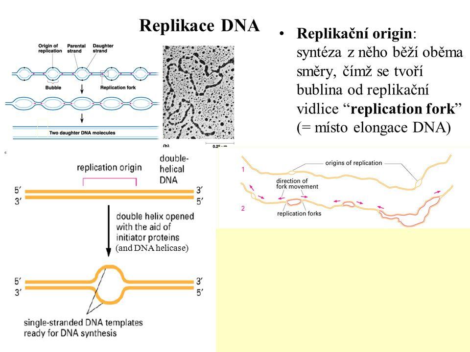 Existuje řada problémů , které musí DNA polymeráza překonat, aby mohla kopírovat DNA DNA polymerázy nedovedou rozvolnit DNA duplex, tak aby oddělily obě vlákna, která mají být kopírována Všechny známé DNA polymerázy dovedou pouze prodlužovat již existující vlákno DNA či RNA (tzv.