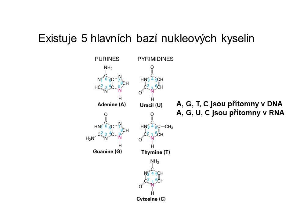 Všechny nukleotidy mají společnou strukturu