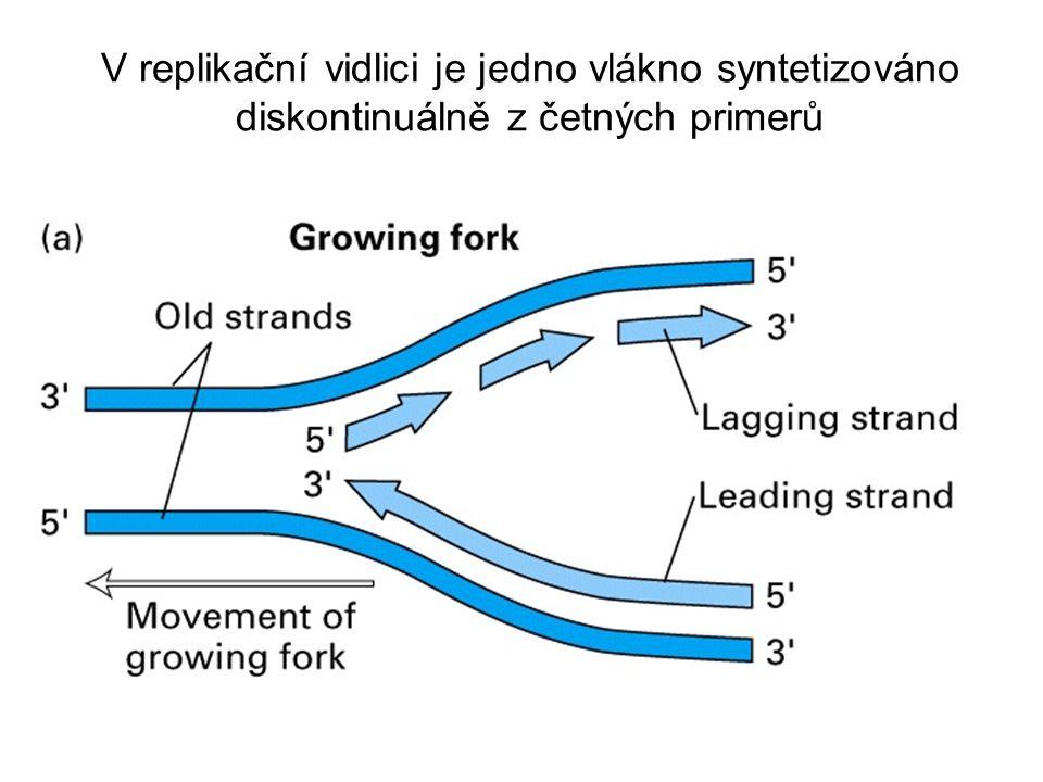 Vlákna DNA jsou antiparalelní Nová DNA roste z 5'  3', jelikož DNA polymeráza připojuje nukleotidy pouze k 3' konci vlákna DNA (leading strand) Okazakiho fragmenty, což jsou krátké úseky nově syntetizované DNA (dlouhé tisíce bází u prokaryot a stovky u eukaryot), jsou spojovány DNA ligázou za vzniku lagging vlákna DNA
