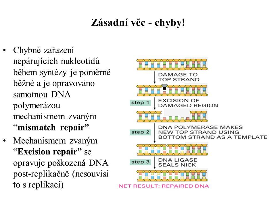 Deaminace a depurinace relativně častá deaminace může být důvodem proč není v DNA uracil
