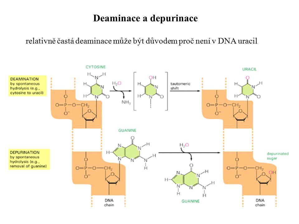 Pyrimidinový dimer další relativně častý typ poruchy