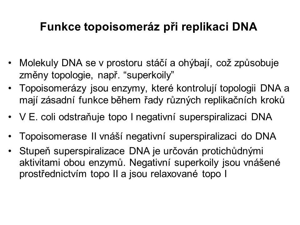 Rozdělení DNA topoisomerů SV40 obsahujících různý počet superkoilů