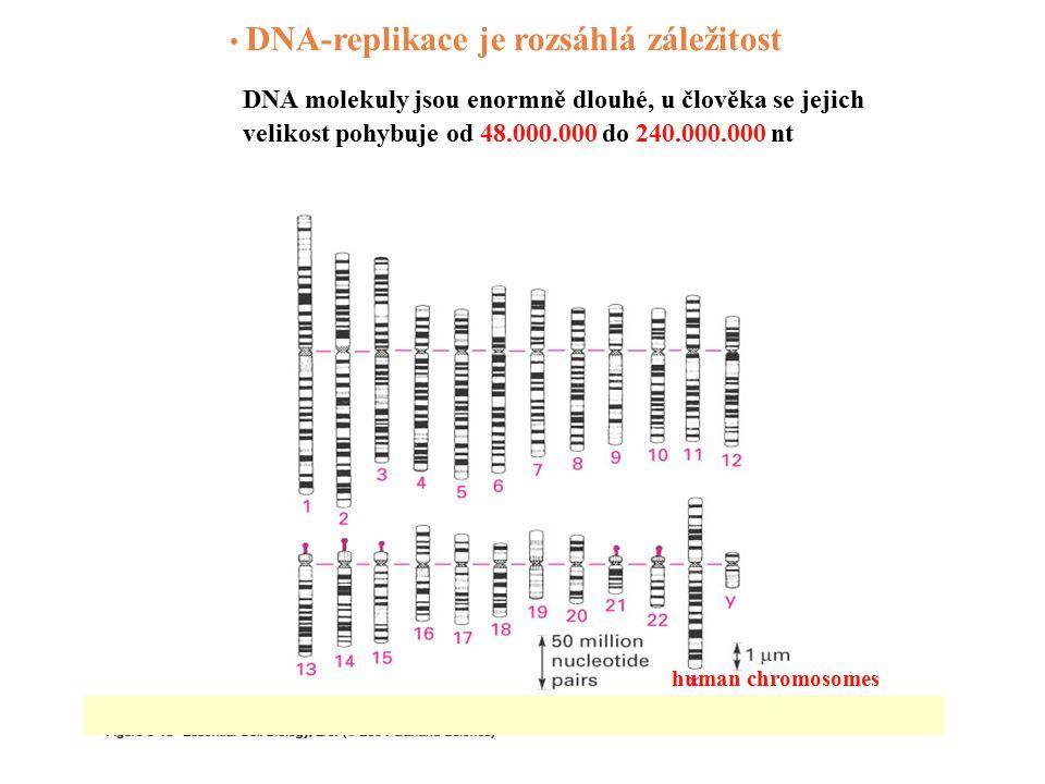 Periodicita nukleozomu