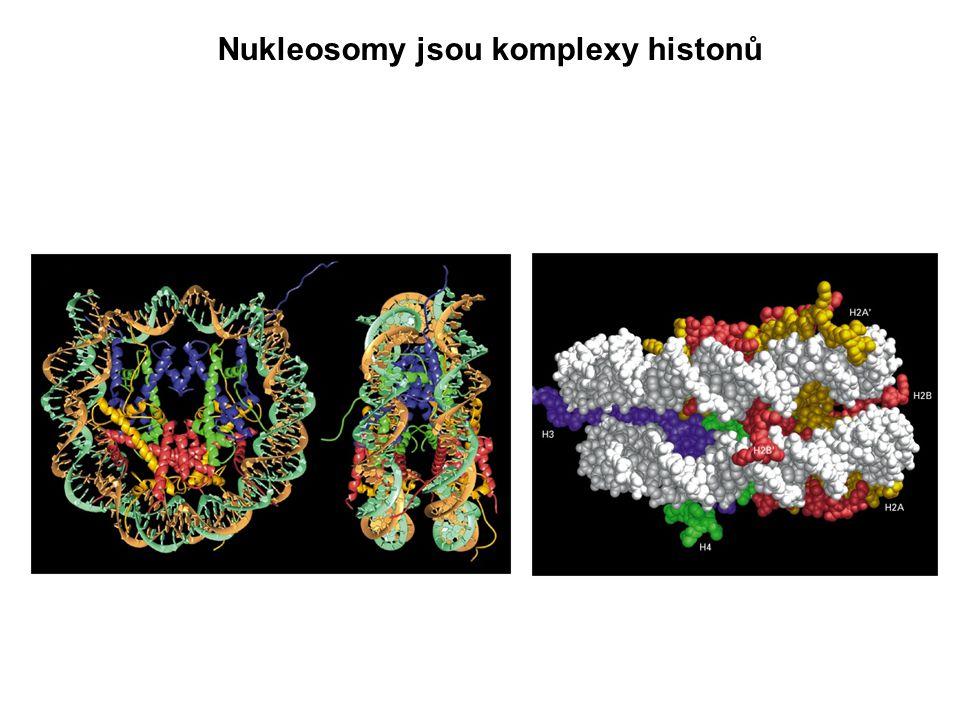 Úrovně sbalení chromatinu viděné v elektronovém mikroskopu Výsledek: DNA je sbalena do mitotického chromosomu, který je 10-50 000x kratší než celková délka DNA