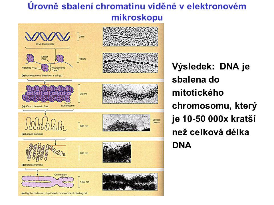 DNA je kompaktně sbalena díky vazbě proteinů. Nejvyšší strukturou je mitotický chromosom.