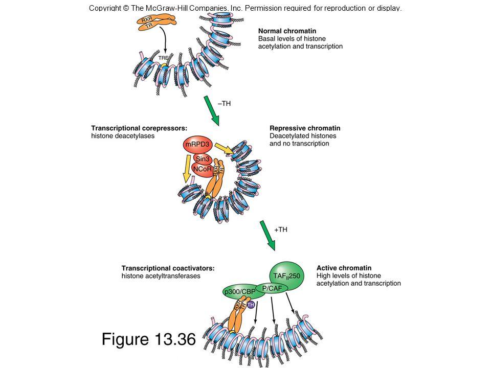 Molekulární definice genu Gen je takový úsek DNA, který je nutný pro syntézu funkčního polypeptidu Oblasti DNA, které kódují molekuly RNA jako tRNA a rRNA také považujeme za geny V eukaryotické DNA leží geny mezi velkými úseky nefunkční, nekódující DNA.