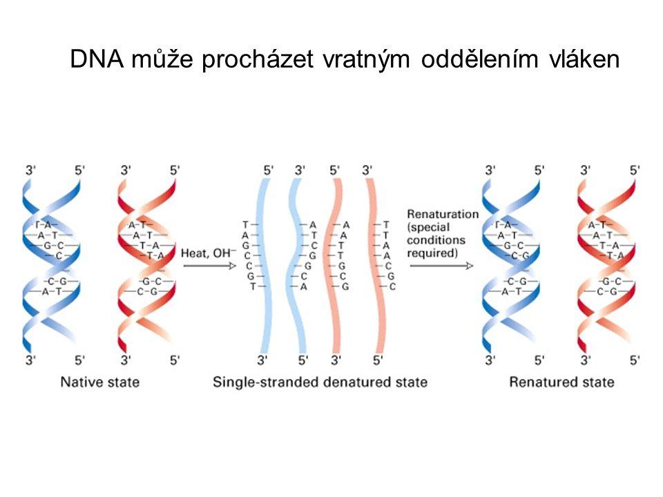 Řada DNA molekul existuje v kruhové formě a její lokální rozvijení může způsobit superspiralizaci supercoiledrelaxed