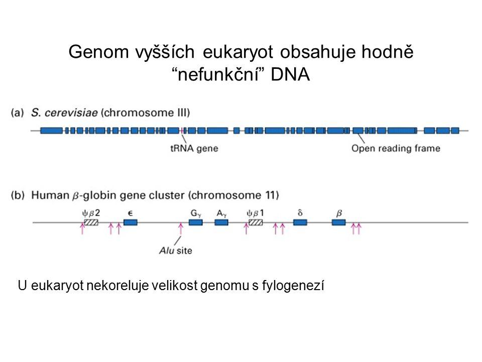 Obsah DNA je v eukaryotickém genomu velmi variabilní V průběhu evoluce se genom zmenšuje nebo expanduje?