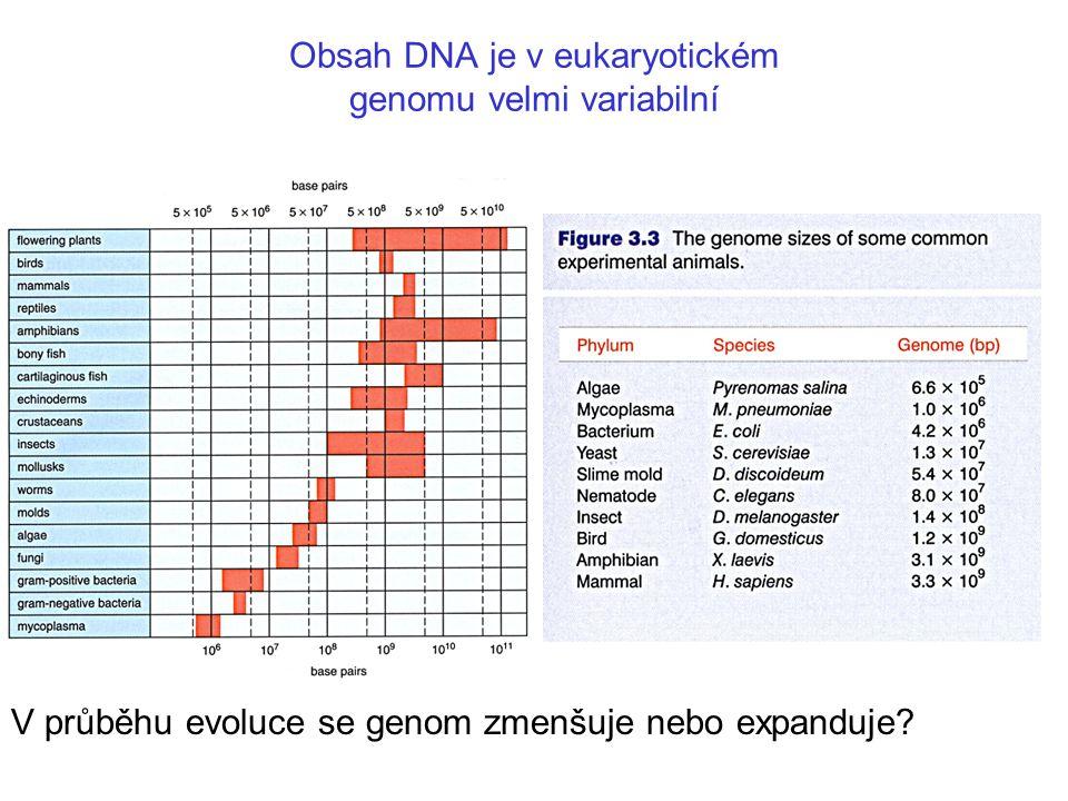 Bakteriální operony vytvářejí polycistronickou mRNAs, zatímco většina eukaryotických mRNAs je monocistronická a obsahuje introny
