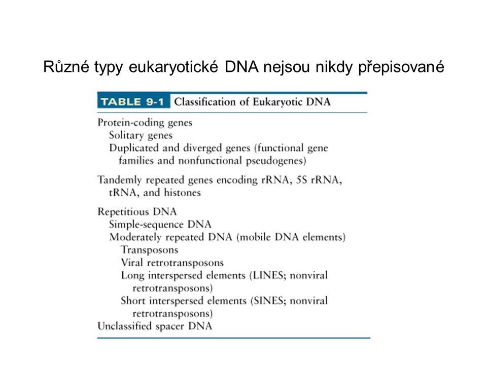 Mobilní DNA Mobilní sekvence (částečně opakované) se vyskytují v prokaryotických genomech, u vyšších rostlin a živočichů Tyto sekvence jsou dlouhé od stovek do tisíců bází Tyto sekvence jsou kopírované a integrované (=vkládané) do nových oblastí v genomu procesem transpozice Pro mobilní sekvence není známa žádná užitečná funkce