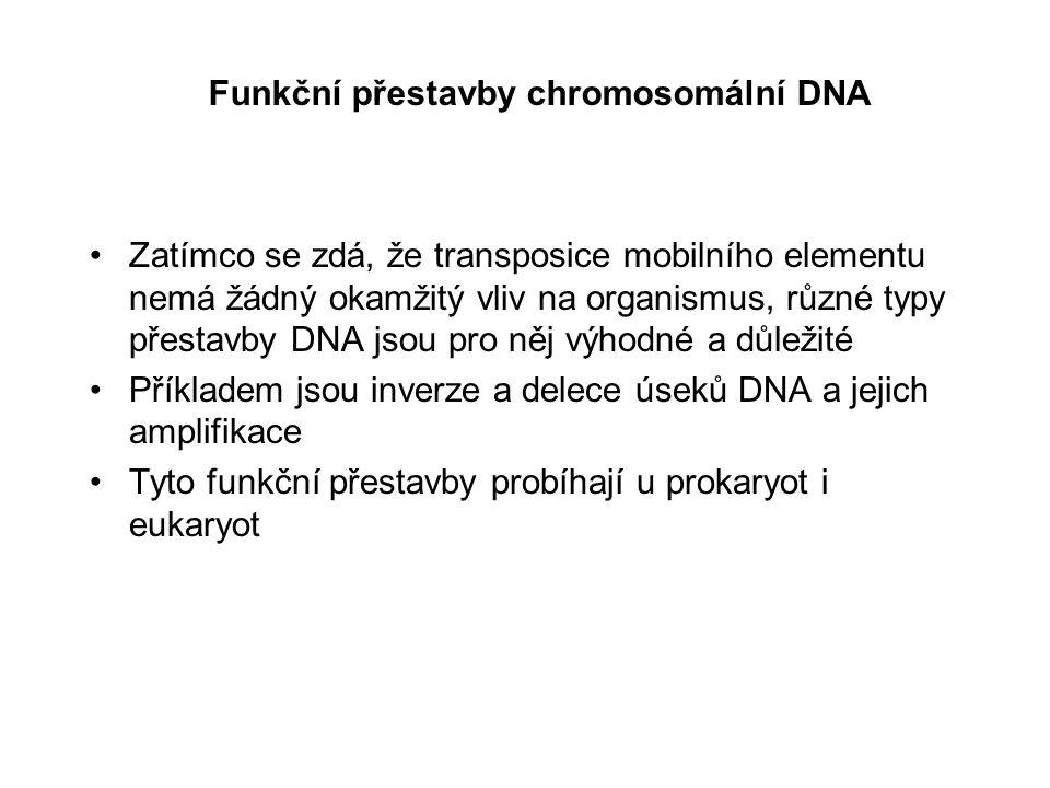 Organizace buněčné DNA do chromosomů Většinou jsou bakteriální chromosomy kruhové s pouze jedním počátkem replikace Každý eukaryotický chromosom je tvořen jednou lineární molekulou DNA, která obsahuje několik počátků replikace (=origins of replication) Eukaryotická DNA je asocióvaná s histony, čímž se vytváří chromatin Mikroskopická pozorování počtu a velikosti eukaryotických chromosomů a způsob jejich barvení odhalily řadu důležitých aspektů jejich struktury