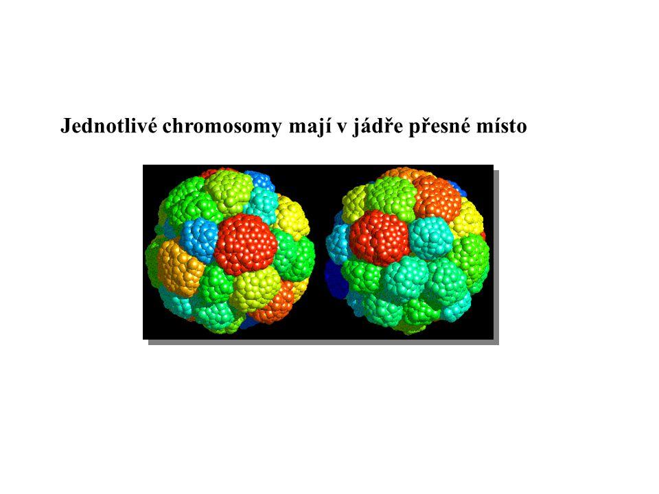 Pro replikaci a dědění eukaryotického chromosomu jsou nezbytné 3 funkční elementy počátky replikace DNA centromera 2 konce (telomery)