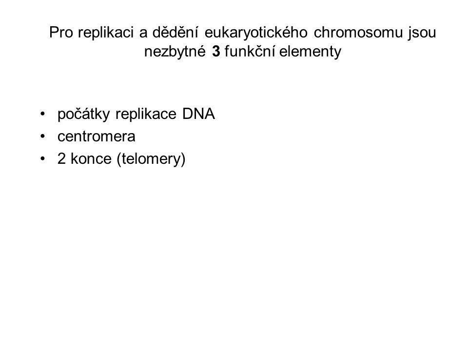 Centromery jsou nezbytné pro stabilitu chromosomů během mitózy jsou strukturně složité DNA v lidských centromerách je představována rodinou vysoce repetitivní, tandemově uspořádané 'satelitní' DNA, která měří na délku 300-5,000 kb