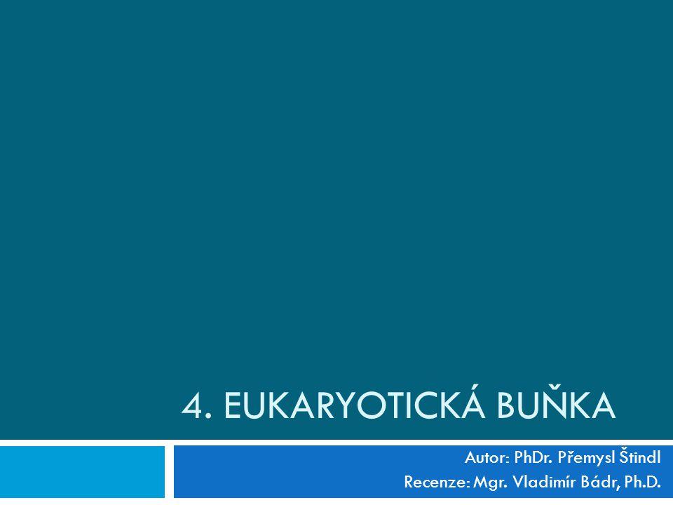 4. EUKARYOTICKÁ BUŇKA Autor: PhDr. Přemysl Štindl Recenze: Mgr. Vladimír Bádr, Ph.D.