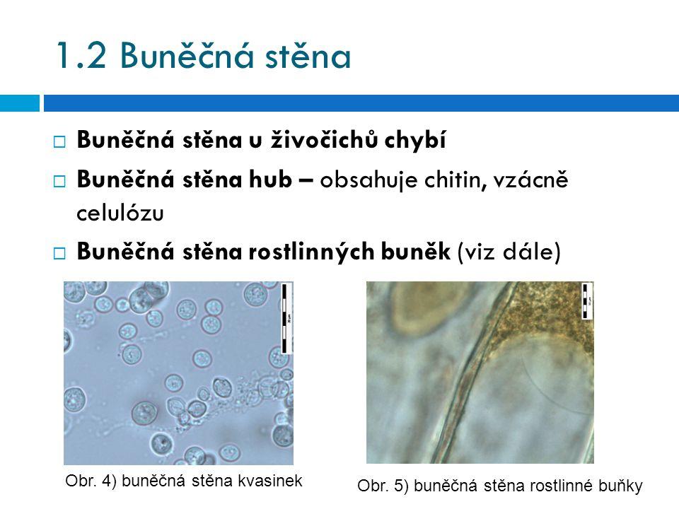 1.2 Buněčná stěna  Buněčná stěna u živočichů chybí  Buněčná stěna hub – obsahuje chitin, vzácně celulózu  Buněčná stěna rostlinných buněk (viz dále) Obr.