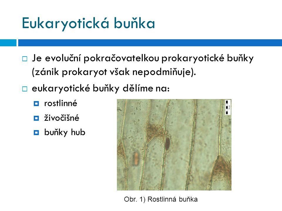 Eukaryotická buňka  Je evoluční pokračovatelkou prokaryotické buňky (zánik prokaryot však nepodmiňuje).  eukaryotické buňky dělíme na:  rostlinné 