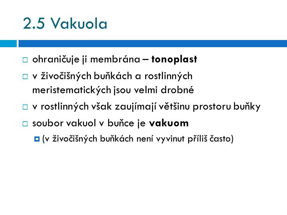 2.5 Vakuola  ohraničuje ji membrána – tonoplast  v živočišných buňkách a rostlinných meristematických jsou velmi drobné  v rostlinných však zaujímají většinu prostoru buňky  soubor vakuol v buňce je vakuom  (v živočišných buňkách není vyvinut příliš často)