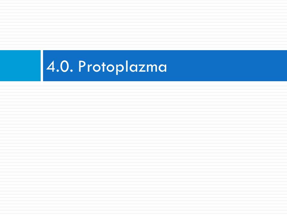Protoplazma  metabolicky aktivní, živý obsah buňky  dělíme ji na:  A) protoplazmu jádra (nukleoplazmu, karyoplazmu)  B) protoplazmu mimo jádro (cytoplazmu)  organely a inkluze jsou v buňce uloženy v tzv.