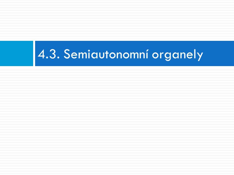4.3. Semiautonomní organely