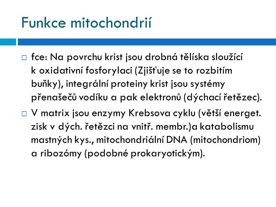 Funkce mitochondrií  fce: Na povrchu krist jsou drobná tělíska sloužící k oxidativní fosforylaci (Zjišťuje se to rozbitím buňky), integrální proteiny