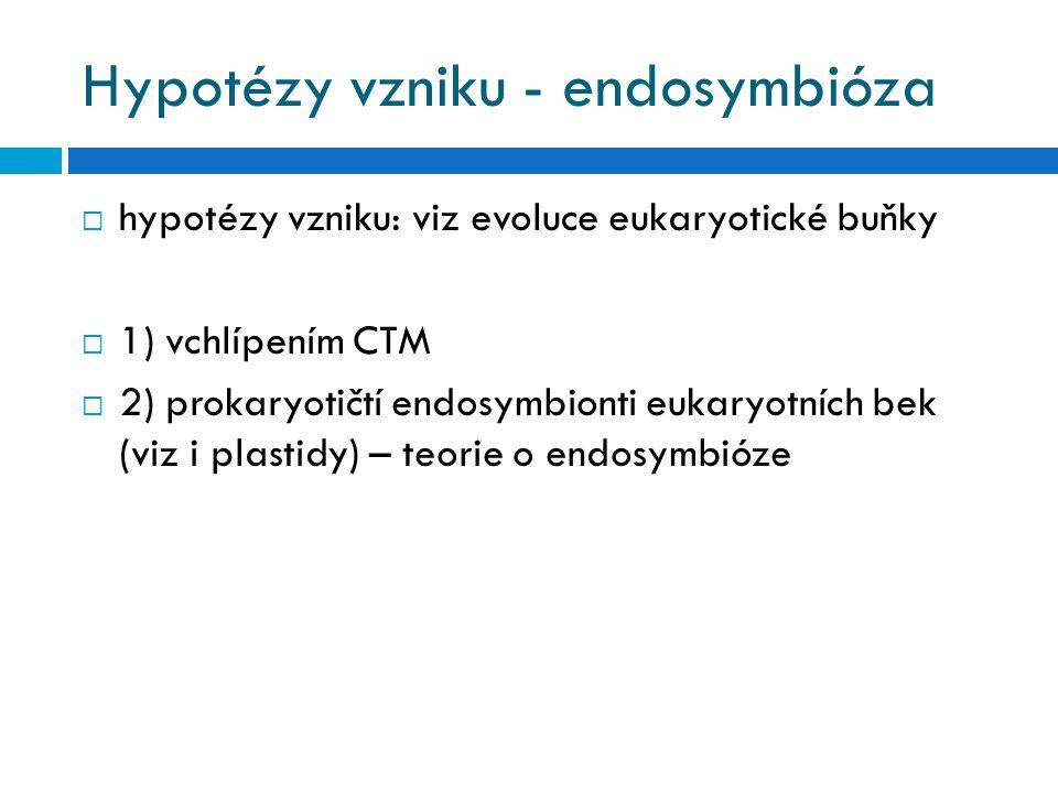 Hypotézy vzniku - endosymbióza  hypotézy vzniku: viz evoluce eukaryotické buňky  1) vchlípením CTM  2) prokaryotičtí endosymbionti eukaryotních bek (viz i plastidy) – teorie o endosymbióze