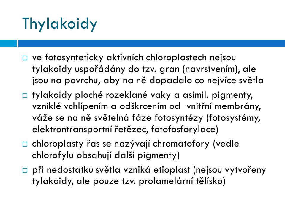 Thylakoidy  ve fotosynteticky aktivních chloroplastech nejsou tylakoidy uspořádány do tzv. gran (navrstvením), ale jsou na povrchu, aby na ně dopadal