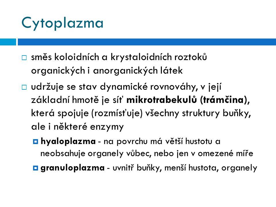 Endoplazmatické retikulum drsné A B C D E Obr. 6) (dle Štindl, 2005)