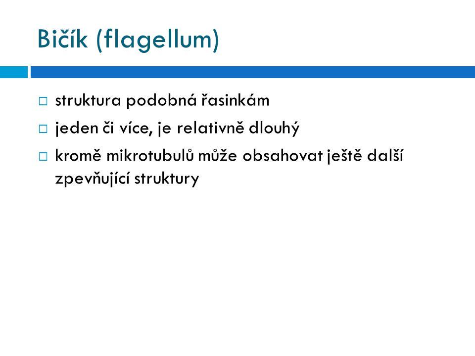 Bičík (flagellum)  struktura podobná řasinkám  jeden či více, je relativně dlouhý  kromě mikrotubulů může obsahovat ještě další zpevňující struktur