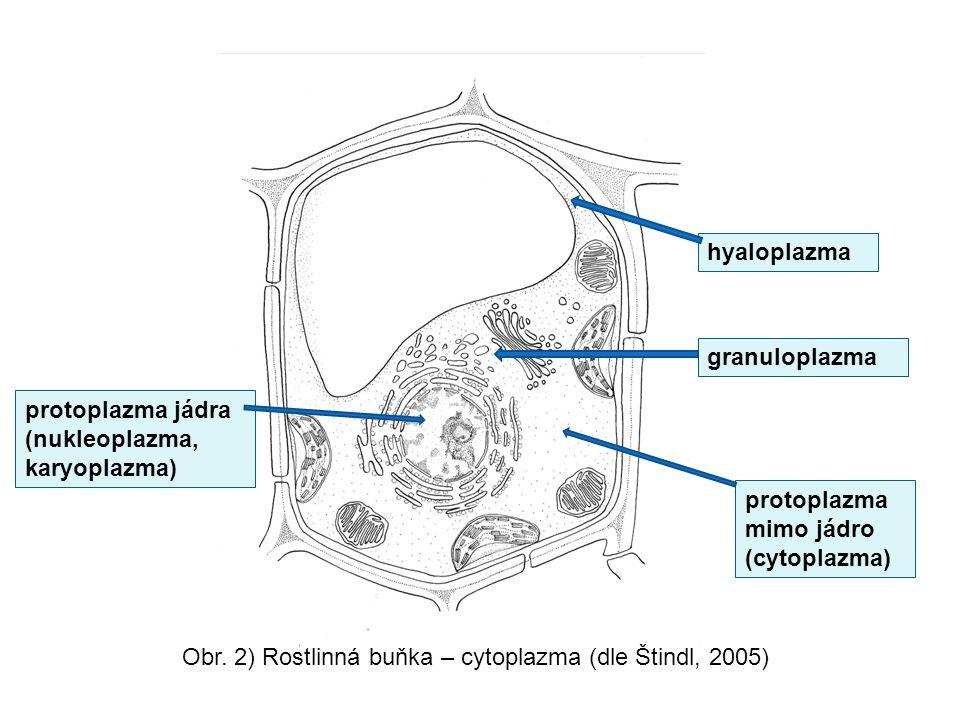 Obr. 2) Rostlinná buňka – cytoplazma (dle Štindl, 2005) protoplazma mimo jádro (cytoplazma) protoplazma jádra (nukleoplazma, karyoplazma) hyaloplazma